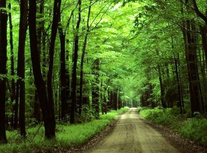 Инструктаж на Мицубиси в лесу